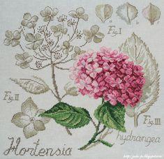 DFEA, Les brodeuses parisiennes, étude botanique, hortensia, Véronique Enginger, botany, hydrangea, botanical study, embroidery