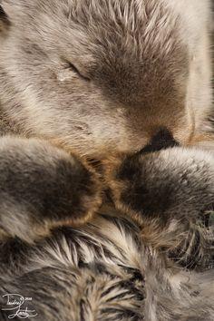 Magical Nature Tour — Fluffy Otter by *DeeOtter on deviantART