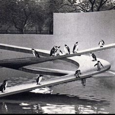 Penguin Pool at London Zoo by Lubetkin