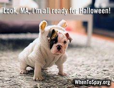 #Halloween #pets #dog #cat #costumes