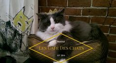 Coined North America's first cat café, Le Café Des Chats opened it's doors in 2014. Le Café Des Chats is a cat cafe in Montreal.