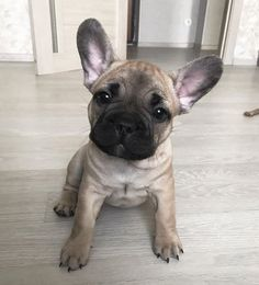 Looking for elegant dog names? Here is a collection of sophisticated male/female dog names. Dog Breed Names, Female Dog Names, Best Dog Names, Types Of Dogs Breeds, Dog Breeds, French Bulldog Names, Sansa, English Bulldogs, French Bulldogs