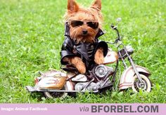 Dog of Anarchy