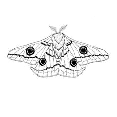 Emperor Moth Art Print by actiasartistry Moth Tattoo Design, Sketch Tattoo Design, Tattoo Sketches, Tattoo Drawings, Tattoo Designs, Moth Drawing, Wings Drawing, Line Art Tattoos, Leg Tattoos