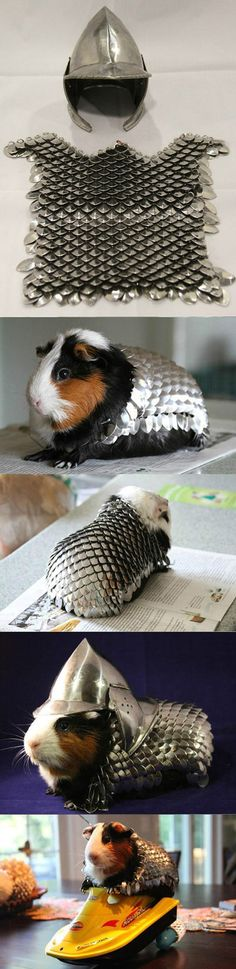 Prepare Your Guinea Pig For Battle