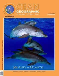 Dolphin Images, Online Interview, Underwater Photographer, Dolphins, Whale, My Books, Ocean, This Or That Questions, Live