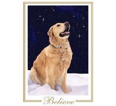 Phoenix, Golden Retriever - We Believe In Santa Claus