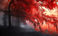 Dark Red Autumn HD Wallpaper