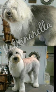 My groom of an old English sheepdog before and after .took me almos 3 hours Dog Grooming Styles, Dog Grooming Salons, Poodle Grooming, Cat Grooming, Puppy Care, Dog Care, Sheep Dog Puppy, Sheep Dogs, Old English Sheepdog Puppy