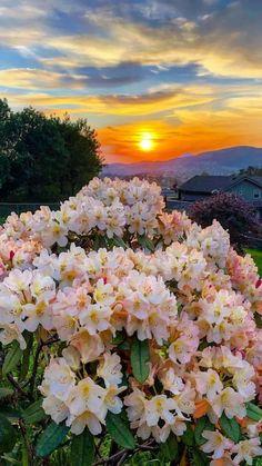 Beautiful Nature Pictures, Nature Photos, Amazing Nature, Beautiful Landscapes, Beautiful World, Beautiful Places, Beautiful Sunrise, Beautiful Morning, Beautiful Flowers Garden