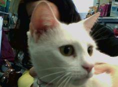 Misi Valle #gato #veterinario www.veterinariogatos.com