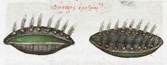 2nd quarter of the 16th century-3rd quarter of the 16th century Manuel Philes, De animalium proprietate British Library Burney MS 97 f37r