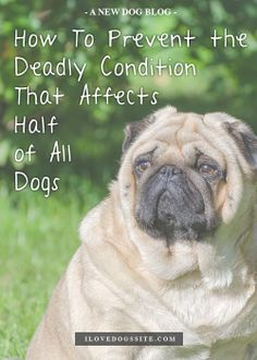 I had no idea so many dog have this problem. A must read for all dog owners! http://theilovedogssite.com/5-tips-on-preventing-obesity-in-your-dog/?src=PIN_PM_ObesityPrevent