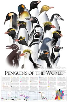 """Penguins Of The World Poster (24"""" x 36"""")"""
