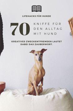 #Hund || #Hacks || #Hund || Ideen || Tipps || Hundehacks || Bilder || Kniffe
