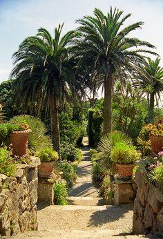 sub-tropical garden, Tresco Abbey Gardens, Scilly Isles, UK