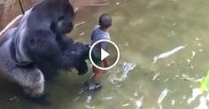 (VIRAL) NEW CAMERA ANGLE SHOWS WHAT THE GORILLA WAS REALLY DOING AFTER THE BOY FELL IN. LOOK CLOSE! – Magical Recipes For Healthy Life