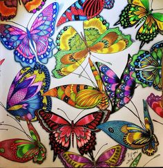 Colouring...butterflies