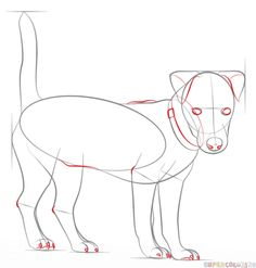 How to draw a jack russell terrier | Step by step Drawing tutorials