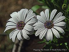 Mark Fisher's World Of Photography ™: Flipping The Details • American Photographer Mark ...