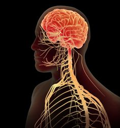 Unlocking the power of the Vagus Nerve for self healing.--How to Control Inflammation with Your Brain Trauma, Brain Nerves, Vagus Nerve, Central Nervous System, Alternative Health, Alternative Therapies, Alternative Treatments, Alternative Medicine, Nutrition