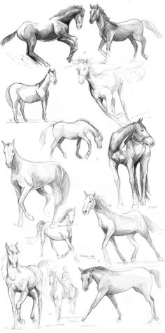 15 best Ideas for drawing simple animals anatomy Horse Drawings, Art Drawings Sketches, Animal Drawings, Horse Running Drawing, Horse Sketch, Horse Anatomy, Horse Artwork, Animal Sketches, Drawing Skills