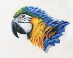 Macaw study | Mobile Artwork Viewer