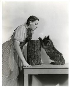 "Judy Garland as Dorothy and ""Toto"" portrait from The Wizard of Oz.    May 31, 1939    Key set #1060x33"