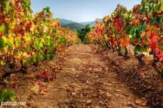 Provence vineyard in Autumn. It's almost grape harvest time in France!   Searching for perfect wine travel experience? www.bo-voyage.com
