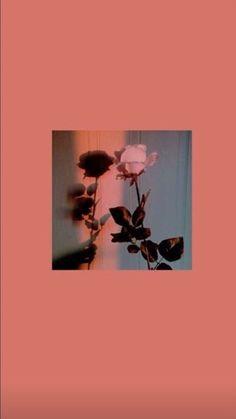 I gave you a rose you go gülüverip Iphone Wallpaper Images, Disney Phone Wallpaper, Mood Wallpaper, Iphone Wallpaper Tumblr Aesthetic, Homescreen Wallpaper, Iphone Background Wallpaper, Aesthetic Pastel Wallpaper, Nature Wallpaper, Aesthetic Wallpapers