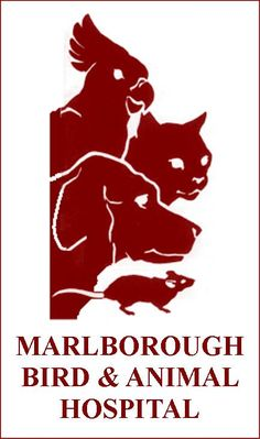 1000 Images About Marlborough Ct On Pinterest Art Centers Pilates Studio And Library Home