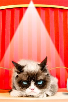 Grumpy Cat Shares Tips For Surviving the Holidays (If You Really Hate Socializing)