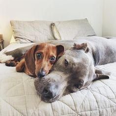 5 Ways Dogs Help Make A House A Home - Front + Main : Front + Main