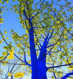 Des Arbres peints par Konstantin Dimopoulos - L'installateur Australien Konstantin Dimopoulos peint les troncs et les branches des arbres en bleu vif.
