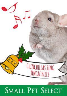 Christmas Tunes, Vocal Range, Chinchillas, Homemade Dog Treats, New Bands, Cool Pets, Jingle Bells, Adoption, Singing