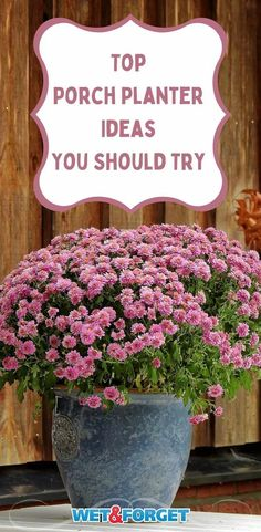 Container Flowers, Container Plants, Container Gardening, Gardening Tips, Outdoor Flower Planters, Outdoor Flowers, Perfect Plants, Cool Plants, Coleus Care
