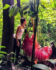 Resultado de imagen para en la isla de sumatra allan la flor mas grande del mundo