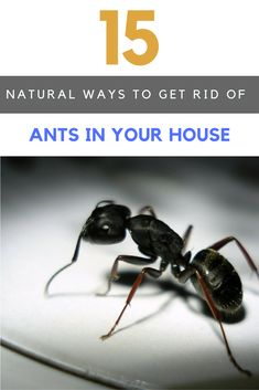 Spiders ants and wasps oh my try these natural insect 15 best ways to get rid of ants in house naturally ccuart Choice Image