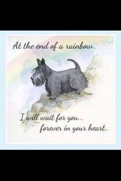 Barnabas-Deschutes Beggar Boy Forever in my heart