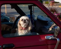 Several States Rule Window Smashing Legal in Rescuing Dogs from Hot Cars Cruel People, Animal Rescue Stories, Feel Good Stories, Pet News, Network For Good, Animal Protection, Left Alone, Pet Travel, Animal Rights