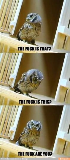 I know it's not a nice word, but the owl's expression was fitting of it