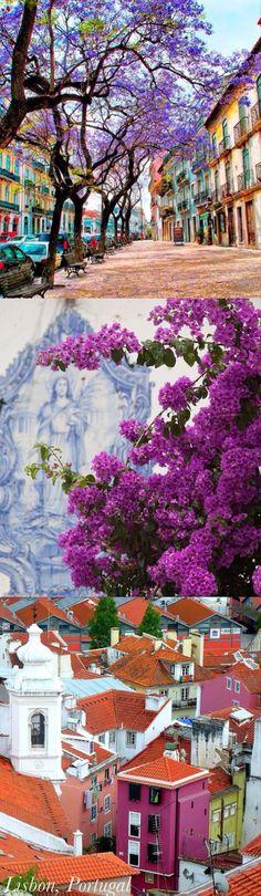 Lisboa colorida e perfumada.