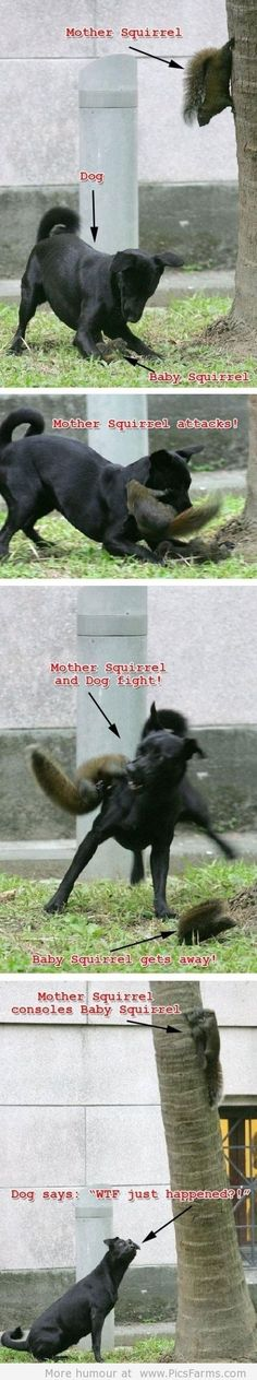Epic Squirrel Win