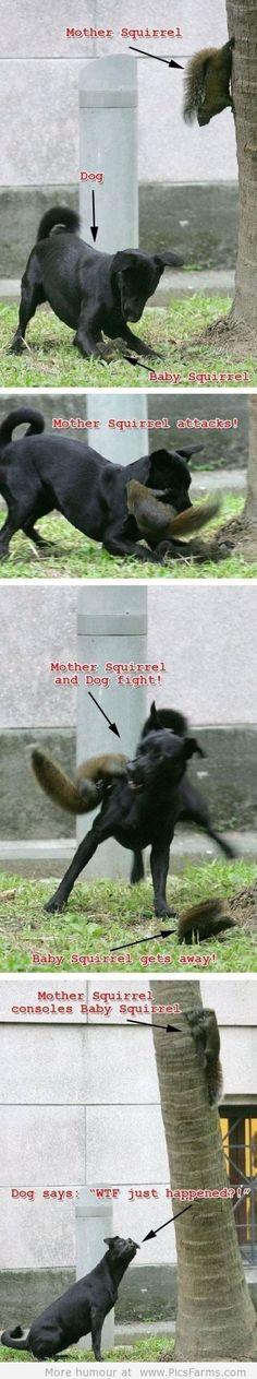 Epic Squirrel Win