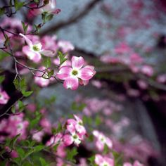 omiya48nc-film66 by yaplan on Flickr.