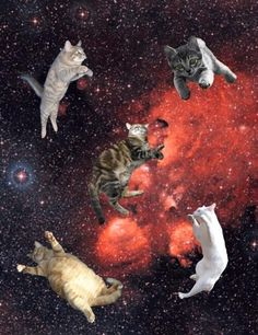 Space Cats @SCatsx