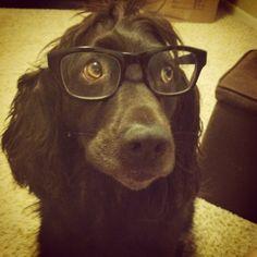 boyd the boykin in glasses
