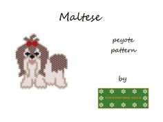 Maltese dog | Craftsy