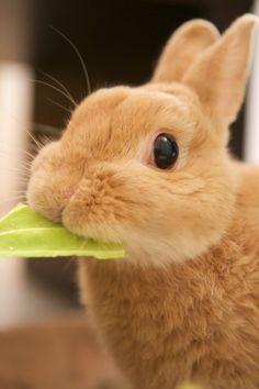 Rabbit eating cabbage by Yuki Matsukura