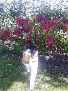 lapjes kat lekker buiten tussen de bloemetjes.